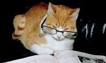 Cat studying IELTS writing Task 1 Task 2 model answers charts tables Speaking